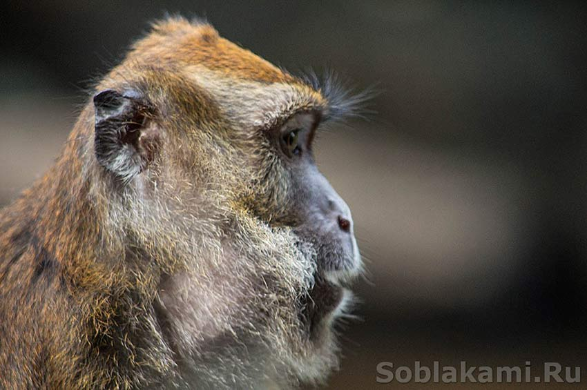 Estrella falls: голодные обезьяны, водопады и тропический лес