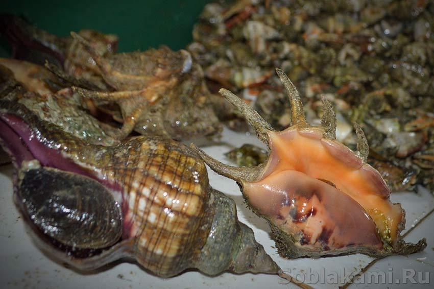 Экзотические морепродукты: как выбрать и приготовить