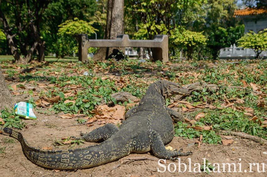 Люмпини парк в Бангкоке: озера, вараны и черепахи