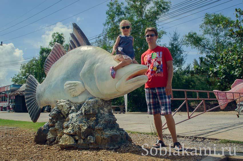Центр исследования рыб в Краби: ручные скаты и черепахи
