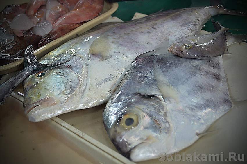 и название всех рыб