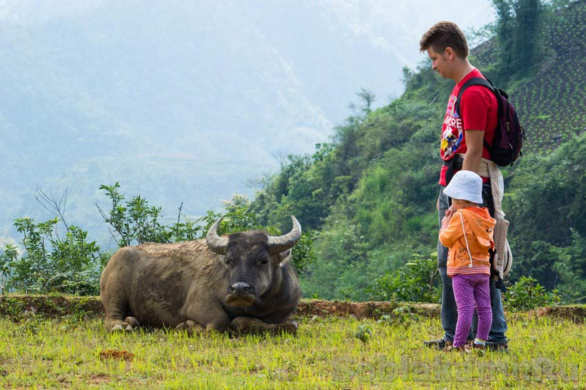 Самостоятельное путешествие по Вьетнаму, сколько стоит