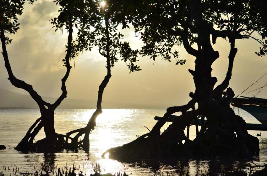 Остров Палаван: фото - 7