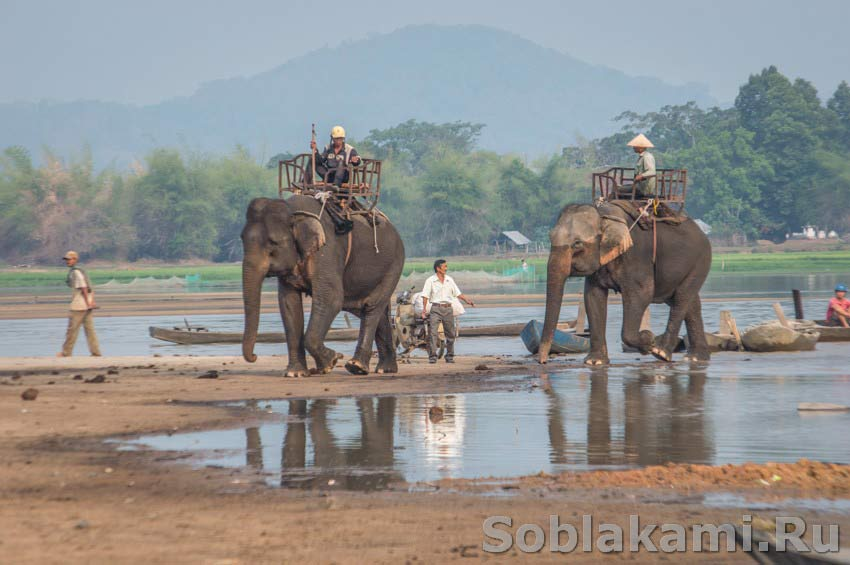 Даклак, Вьетнам, экскурсия на слонах