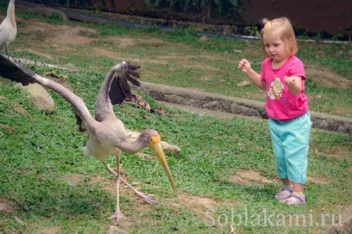 Парк птиц в Куала-Лумпуре, фото