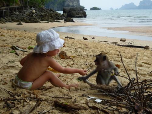 обезьянки на пляже в Ао Нанге