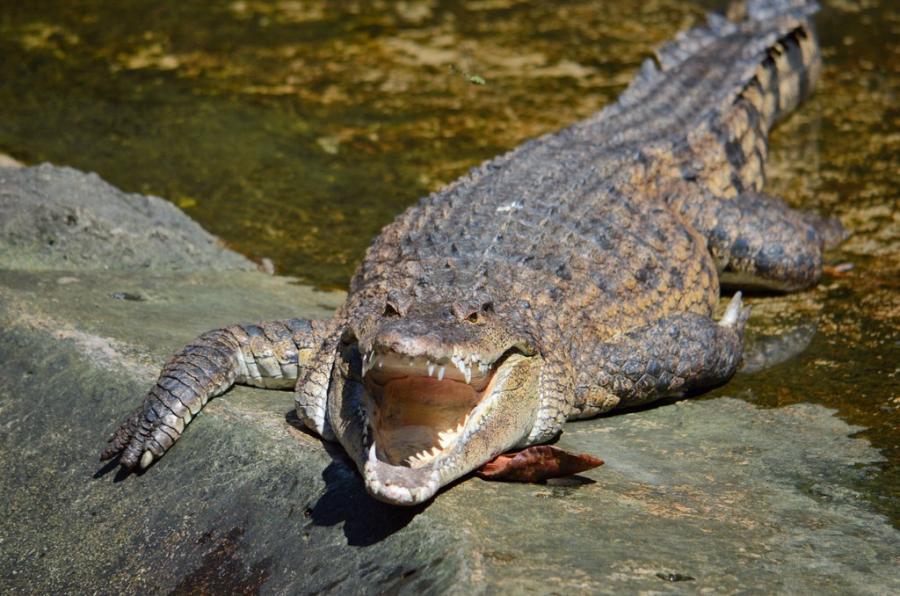 крокодиловая ферма в Пуэрто Принцессе