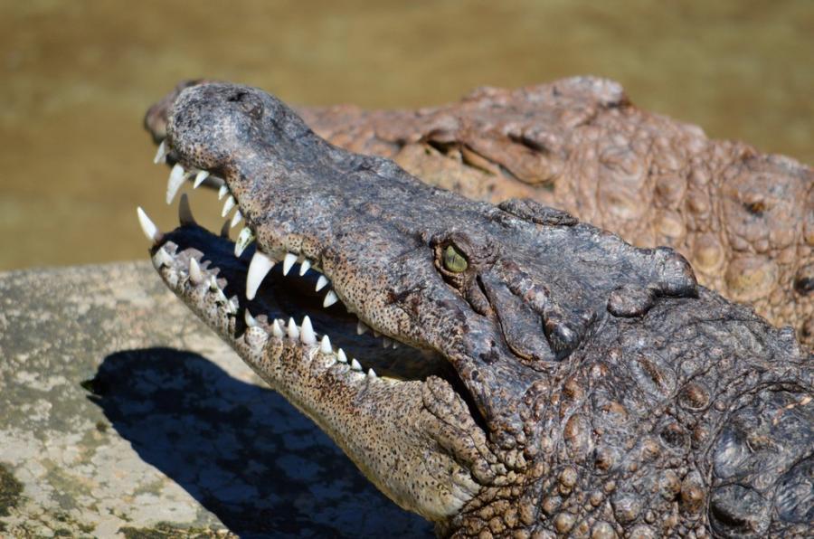 крокодилы в Ираван Эко парке в Пуэрто Принцессе, Филиппины