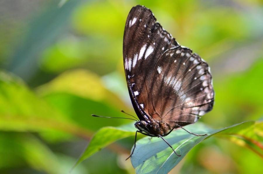 сад бабочек в Пуэрто Принцессе